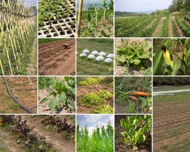 A agricultura é uma das principais formas de construção e transformação do espaço geográfico