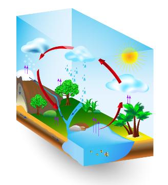 O ciclo da água é o mais importante ciclo biogeoquímico