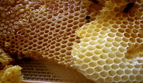 A cera de abelha é um éster.