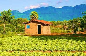 O agricultor familiar ainda é carente de políticas públicas eficazes