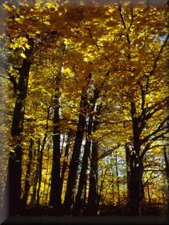 Visão interna de uma floresta caducifólia.