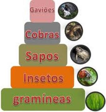 As pirâmides ecológicas são utilizadas para a representação dos níveis tróficos