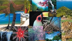 A biodiversidade dos ecossistemas brasileiros