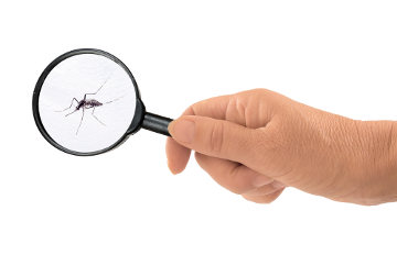 Diferenças entre a Dengue, Chikungunya e Zika