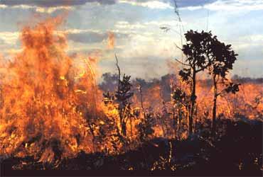 O cerrado em chamas: um processo natural de sucessão ecológica.
