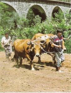 Na agricultura extensiva as técnicas aplicadas são rudimentares.