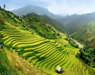 Técnica de terraceamento aplicada em plantações de arroz no Vietnã