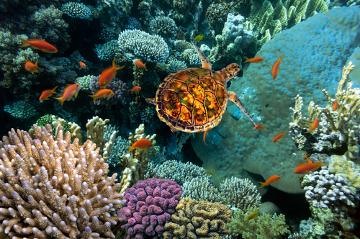 Existem no Brasil apenas cinco espécies de tartarugas marinhas