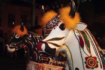 A festa tradicional do bumba meu boi é parte da construção folclórica de nosso país