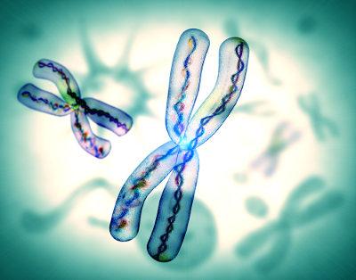 Os cromossomos apresentam genes que determinam nossas características