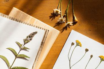 Os herbários armazenam plantas na forma de exsicatas