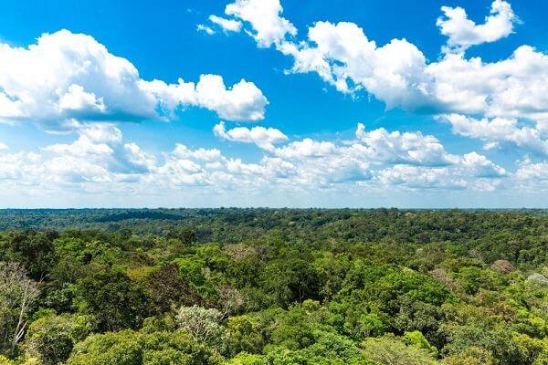 A Amazônia é um importantíssimo patrimônio natural.