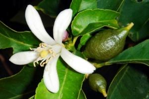 Flor e fruto: estruturas encontradas unicamente nas angiospermas.
