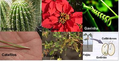 As adaptações foliares visam uma melhor adaptação do vegetal no ambiente