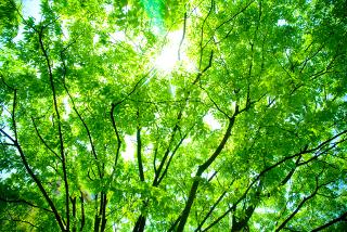 A fotossíntese é um exemplo de reação de oxidorredução muito importante