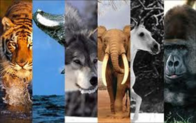 Os mamíferos têm capacidade de inteligência, memória e aprendizado maior que a dos outros vertebrados