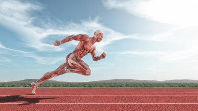 Os músculos são responsáveis, dentre outras funções, pela nossa locomoção