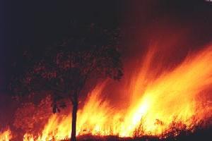 O fogo, desde que bem manejado, pode ser benéfico ao cerrado