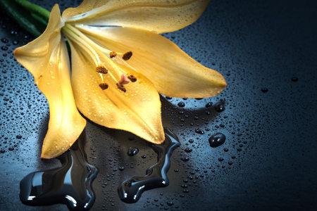 As angiospermas são o único grupo de plantas que apresenta a dupla fecundação