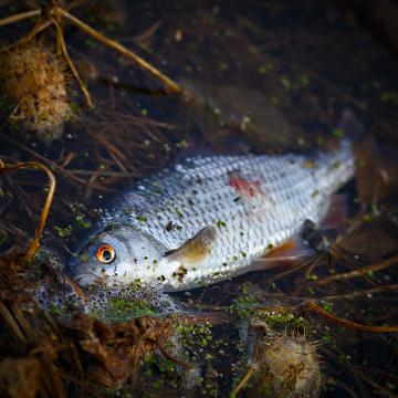 É frequente a morte de animais aquáticos como consequência da poluição