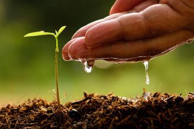 A melhoria do solo serve não somente para aumentar a produtividade, mas também para a conservação ambiental