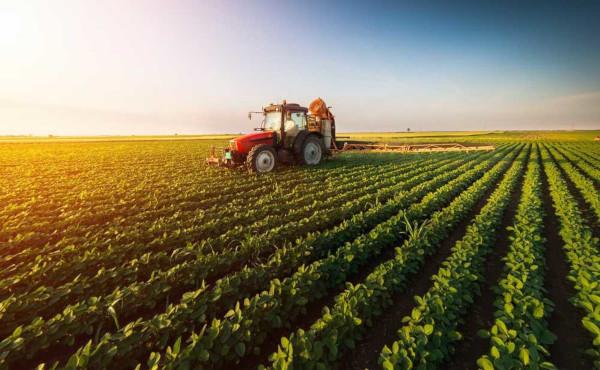 A agricultura pode dividir-se em diferentes tipos de produção, que se adequam às características do ambiente.