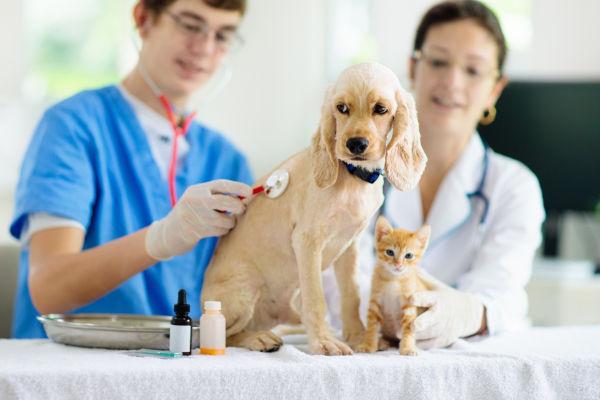 Mercado de trabalho é amplo para médicos veterinários, especialmente de animais de pequeno porte