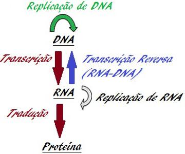 Observe o esquema do Dogma Central da Biologia Molecular