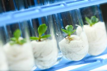 A biotecnologia pode ser usada no melhoramento de plantas