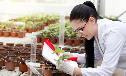Curso de Horticultura está em expansão no Brasil