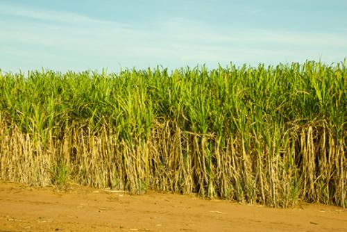 O açúcar movimentou a economia brasileira no início da colonização