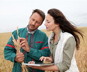 Profissional de Agronomia deve ter uma visão ampla da cadeia de produção e do processo de comercialização